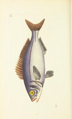 v.12 - The naturalist's miscellany, or Coloured figures of natural objects - Biodiversity Heritage Library