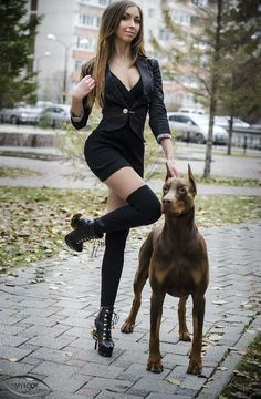Image result for doberman pinscher GIRLS
