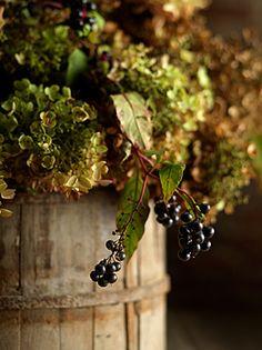 Beautiful grape harvest foliage.