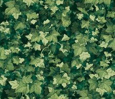 English Ivy ~ Lush  fabric by peacoquettedesigns on Spoonflower - custom fabric