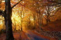 Autumn sunset #sun #wood #forest #sunlight #sunset #beautiful #twitter #instagood #sunset #evening #colorful #win #winner #looking #photomanipulation #instapic #influencer #fashionblogger #travelblogger #followme #travelinfluencer #500px View my portfolio on http://ift.tt/xmAcR4