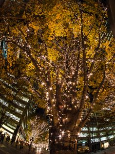 Christmas illumination, Marunouchi Nakadori, Tokyo, Japan