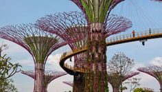 Gardens by The Bay - Supertrees. Landscape architecture by Grant Associates.