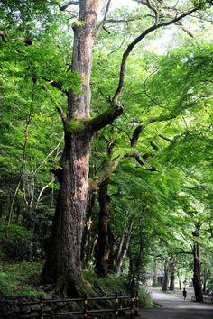 몸도 마음도 게을러지는 꿈속 같은 편백나무 숲 : 네이버 뉴스