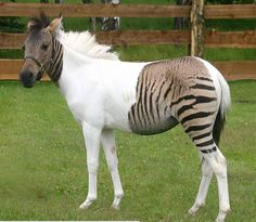 There are animals that have two totally different color patterns... they're gorgeous! http://trendpics.today/1yCPAaQ .