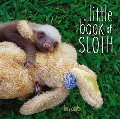 A Little Book of Sloth (Hardcover). Cozy up with adorable baby sloths in this irresistible photographic picture book.Hang around just like a sloth and. Baby Sloth, Cute Sloth, Smiling Sloth, Baby Otters, Kristen Bell, Little Books, Good Books, Pinterest Foto, Baby Animals