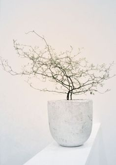 8 Best Tips & Ideas to Incorporate Japanese Interior Design to Your Home - Ianiko Ikebana, Indoor Garden, Indoor Plants, Japanese Interior Design, Deco Floral, Interior Plants, Diy Décoration, Green Plants, Plant Decor
