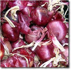 Frutta e Verdura: Cipolle Rosse: Red Onions