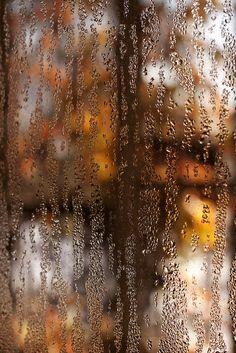 Autumn ~ by stevenbley