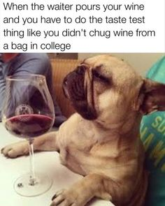 Funny, Memes, Pictures: wine