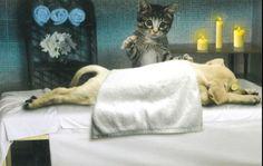 Feline the pet massage market!