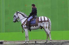 Steve Dent - Horses for Film and Tv
