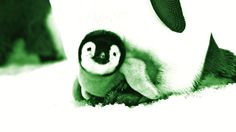 2017-03-14 - wallpaper desktop penguin - #1467658