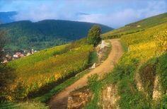 Sentier viticole de Soultzmatt - #Alsace