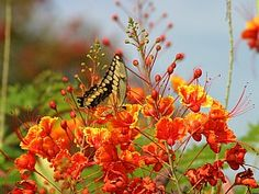Seven flowers for hot summer sun in Texas