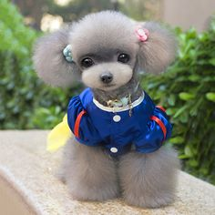 Small Dog Dressing up