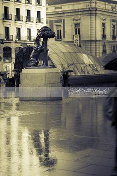 El reflejo del Oso  Madrid  Spain   #ElizabethPadillaPhotography