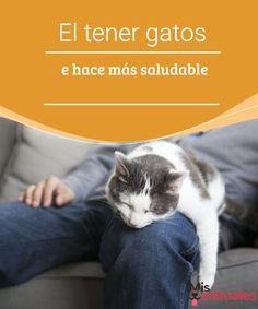 El tener gatos te hace más saludable Aunque los que tienen gatos lo saben y lo han experimentado, hay estudios que afirman que tener gatos te hace más saludable. A continuación te lo contamos todo. #hogar #felinos #salud #bienestar