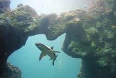 Aquarium de Lyon : Un monde magique à découvrir en famille. #aquarium #balade #famille #Lyon #BaLaDO