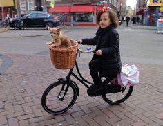 Meisje met haar hondje op de fiets. nov.  2014 Amsterdam Westerstraat  by Amsterdamfietsmuseum