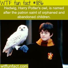 Harry Potter facts - WTF fun facts