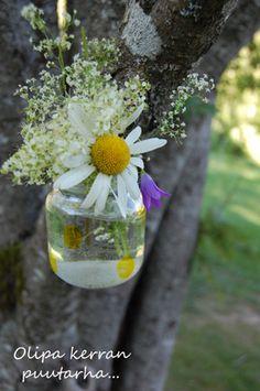Luonnonkukat puiden oksilla Plants, Plant, Planting, Planets