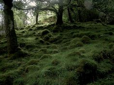 Kentra Bay, Ardnamurchan Peninsula, Scotland
