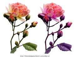 Tubes Fleurs 33