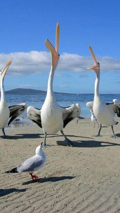 """""""Here comes the fabulous marching gulls from Ocean Bay Manor. Let's give them a round of applause."""" (And the crowd goes wild with cheer)"""