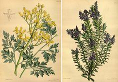 Paxtons-flower-garden.jpg (700×489)