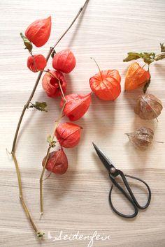 seidenfeins Blog vom schönen Landleben: Lampionblume & einfach orange * Physalis alkekengi & simply orange Orange, Xmas, Christmas, Painting Inspiration, Seeds, Home And Garden, Autumn, Watercolor, Vegetables