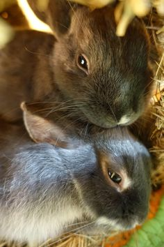 Mommy and Baby Bunny...