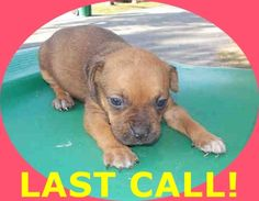 CINDY (A1674709) I am a female tan and black Terrier mix. The shelter staff think I am about 4 weeks old. I was found as a stray and I may be available for adoption on 01/23/2015. — hier: Miami Dade County Animal Services. https://www.facebook.com/urgentdogsofmiami/photos/pb.191859757515102.-2207520000.1422133713./915609831806754/?type=3&theater