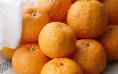 Lady marmelade, la reine des marmelades d'oranges amères