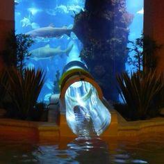 Slide through aquarium.