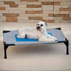 K & H Manufacturing Coolin' Pet Cot - JCPenney