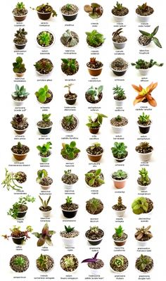 8 Ideas De Id De Suculentas Y Cactus Suculentas Tipos De Plantas Suculentas Cultivo De Suculentas