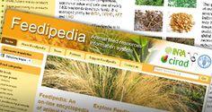 Feedipedia - open access resource on livestock feeds