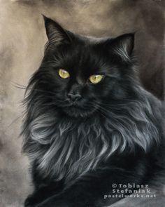 maine-coon-black-cat-portrait