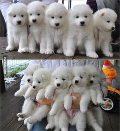 They look like baby polar bears!