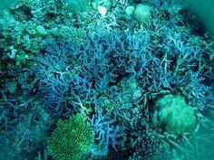 Terumbu karang aneka warna di Perairan Anambas.