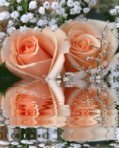 Flowers, Flores, Rose, Animated Gifs, Rosas, Animated Gif, Beautiful Flowers, Roses, Keefers photo f4ac22b0.gif