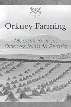 An Orkney farmer writes poignantly about farm life and the devastating foot and mouth disease on a Scottish island in the 1950s. #Orkneyology.com #Orkney #Scottishislands #farming #Scotland Travel Advice, Travel Ideas, Travel Inspiration, Hidden Places, Secret Places, European Travel Tips, Orkney Islands, Adventure Bucket List, Scottish Islands