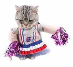 I just love this cheerleader costume, its so funny and adorable Perfect for Cats 🐱 or Dogs 🐶, for Halloween 🎃 or just for fun. This is easy to put on and comfortable for your pet to wear which means you will be able to get better photos to share with your friends on social media. We have the best quality pet costumes so rest assured you won't be disappointed with your purchase. Cheerleader Images, Cheerleader Costume, Cat Costumes, Cosplay Costumes, Cat Superhero, Funny Cosplay, Funny Outfits, Funny Clothes, Just For Fun