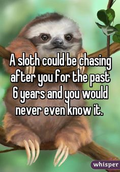 """Someone posted a whisper, which reads """"A sloth could be chasing after you for the past 6 years and you would never even know it. Cute Baby Sloths, Cute Baby Animals, Funny Animals, Wild Animals, Cute Sloth Pictures, Funny Pictures, Funny Cute, Hilarious, Funny Memes"""
