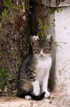 .lindo gattito