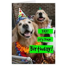 280 Best Golden Retriever Birthdays Images In 2019 Doggies Dogs