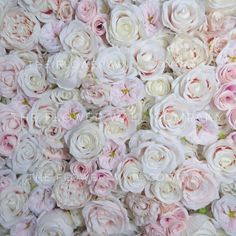 Oh My Blush! Flower Wall   The Flower Wall Company Blush Wedding Reception, Blush Flowers, Flower Wall, Peonies, Plants, Light Pink Flowers, Floral Wall, Plant, Planets