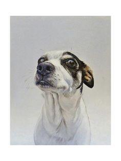 James Ruby 'Maggie Dog' Canvas Art - 35 x 47 Animal Paintings, Animal Drawings, Art Drawings, Polychromos, Dog Portraits, Artist Canvas, Dog Art, Pet Birds, Painting & Drawing