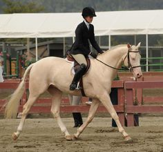 Ivory Coast, a cremello Thoroughbred stallion. I'll take this horse home right now! I absolutely LOVE cremello!